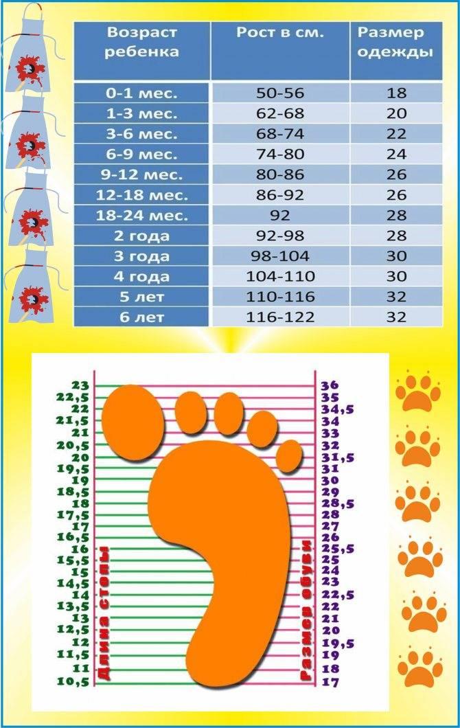 Размеры новорожденного ребенка по месяцам