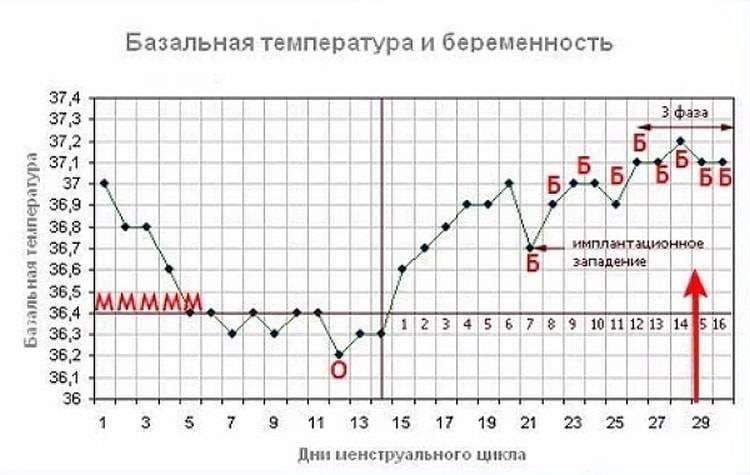 Беременность и температура - официальный сайт обуз «центр общественного здоровья и медицинской профилактики»комитета здравоохранения курской области