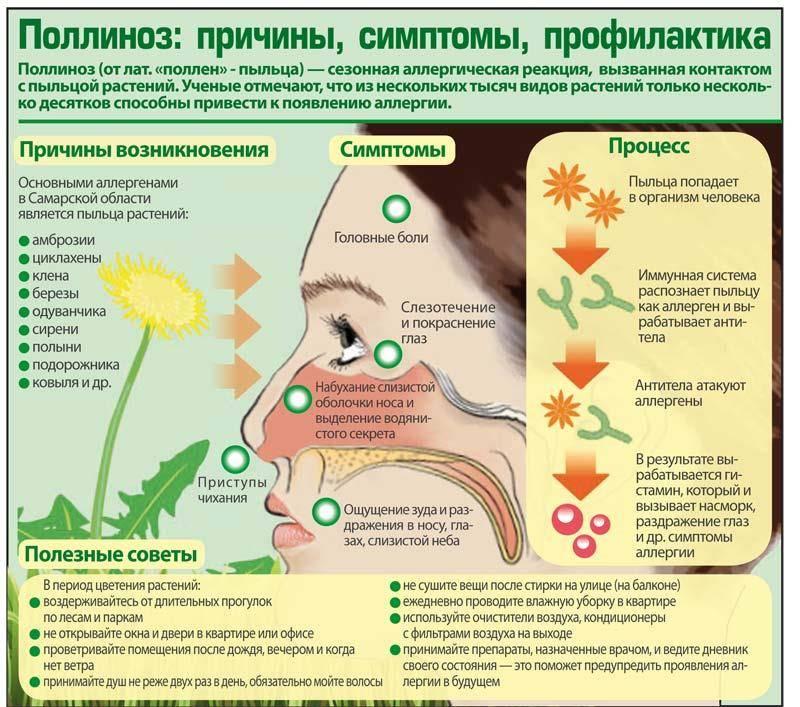 Что такое аллергия? аллергия у ребенка. можно ли вылечить аллергию? -симптомы