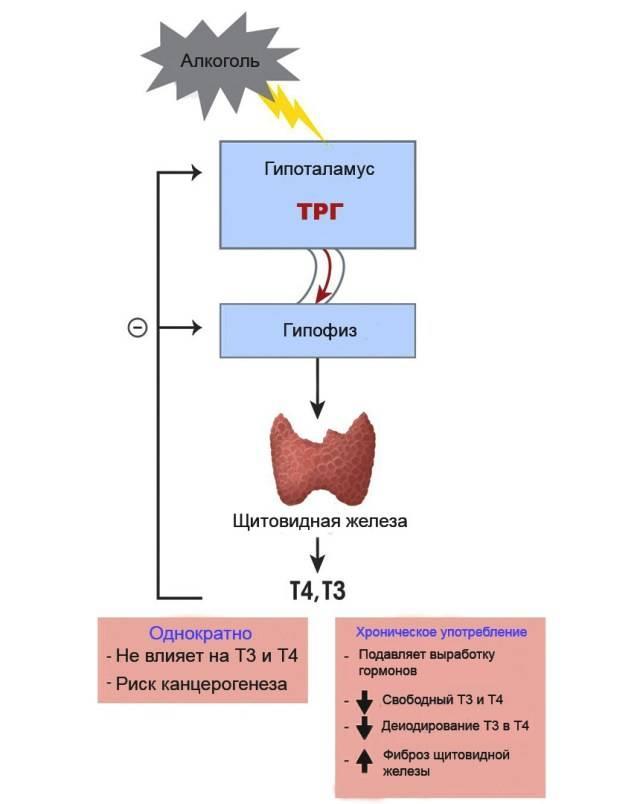 Гиперпролактинемия (галакторея): высокий пролактин — сигнал опасных заболеваний