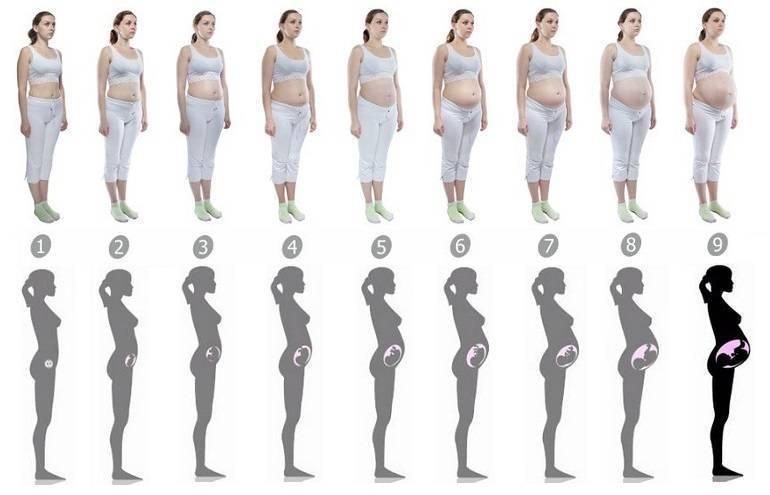 Когда, на каком сроке при беременности начинает расти грудь и насколько она увеличивается?