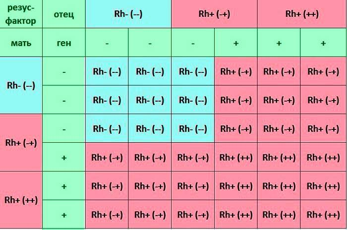 Группа крови у ребенка от родителей: таблица с резус-фактором и способы определения