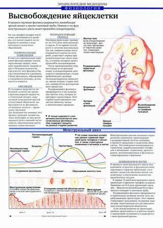 Процедура эко экстракорпорального оплодотворения  этапы по дням | как проводится процедуры эко?