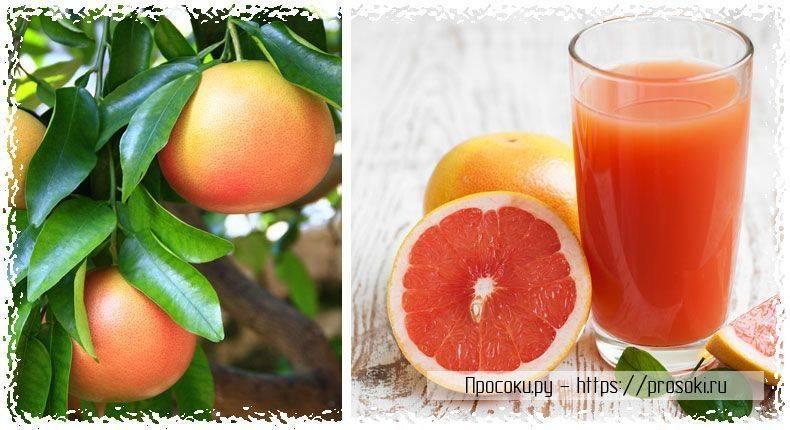 Польза грейпфрута для организма. с чем его нельзя сочетать?