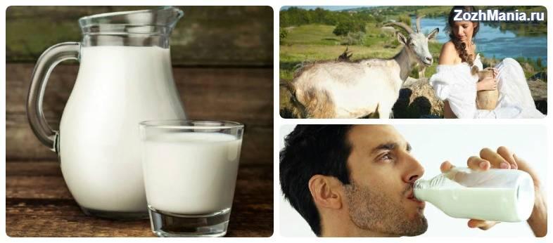 Чем полезно козье молоко. полезные свойства козьего молока   здоровье человека