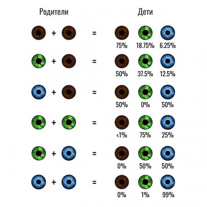 Цвет глаз родителей и цвет глаз ребенка. таблица, принципы и закономерности