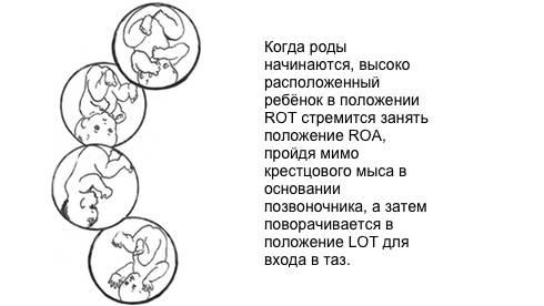 Как ребенок лежит в животе: каким должно быть положение плода на разных неделях беременности? - врач 24/7