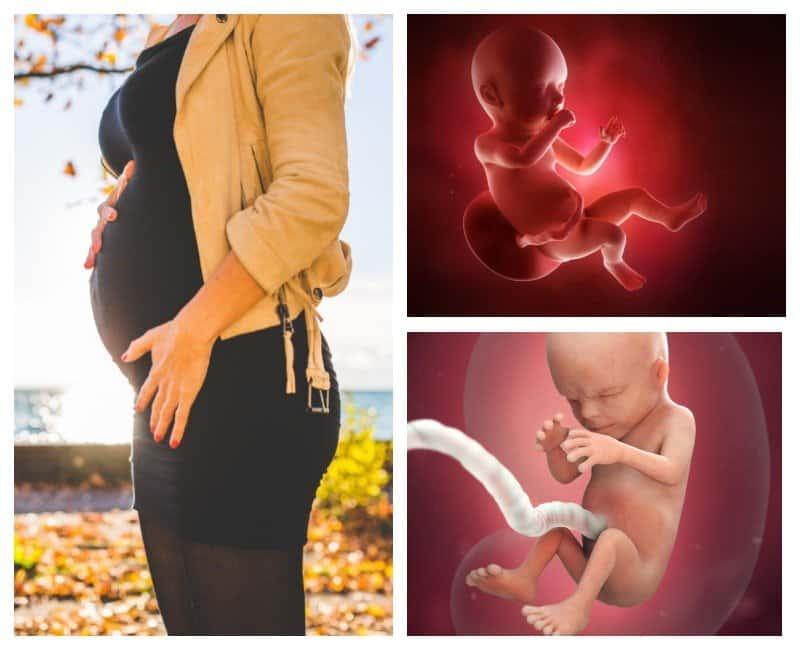 19 неделя беременности: что происходит в 5 месяц от зачатия?
