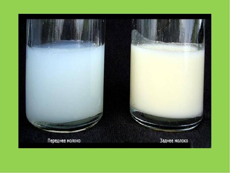 Чем полезно грудное молоко ?? и как долго сохраняется его ценность для ребенка - топотушки