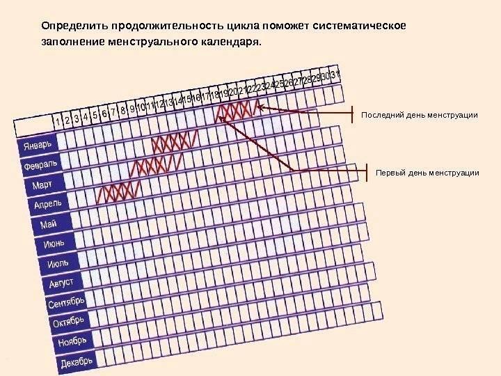 Как посчитать цикл месячных (калькулятор)