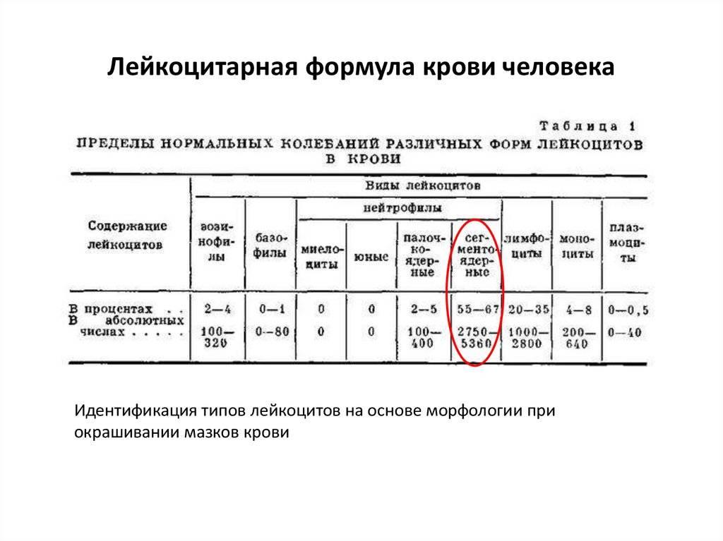 Расшифровка лейкоцитарной формулы крови у детей (норма в таблице)