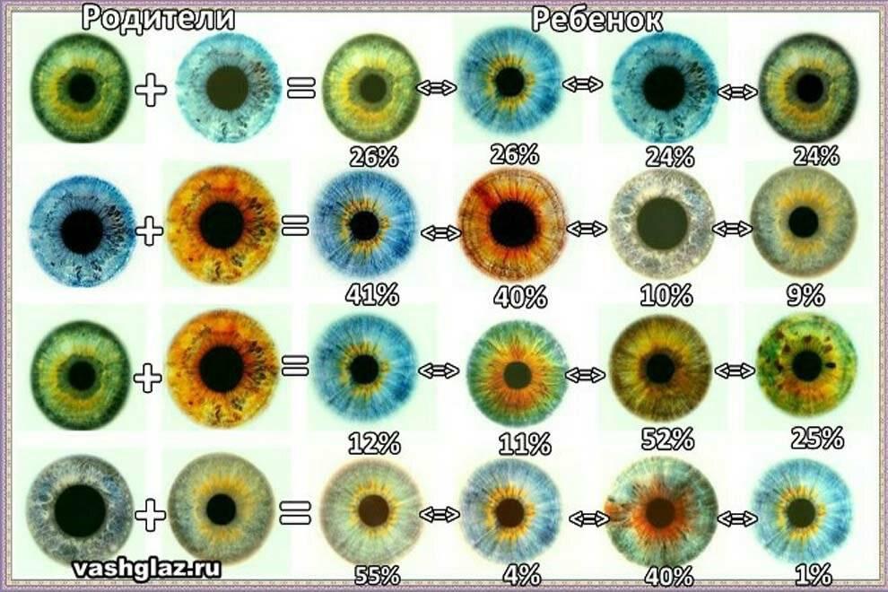 Какой цвет глаз будет у ребенка?