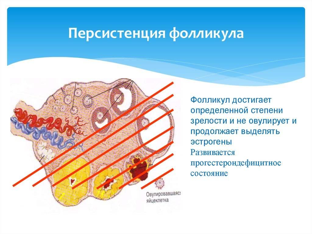 Гипертиреоз: симптомы, лечение, симптомы, диагностика и лечение | альфа - центр здоровья ^^in_city^^