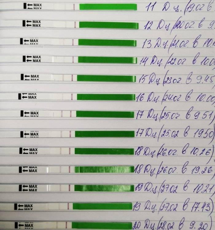 Когда делать узи фолликулометрию, как проводится и как подготовиться к исследованию для определения овуляции? - доктор в сети