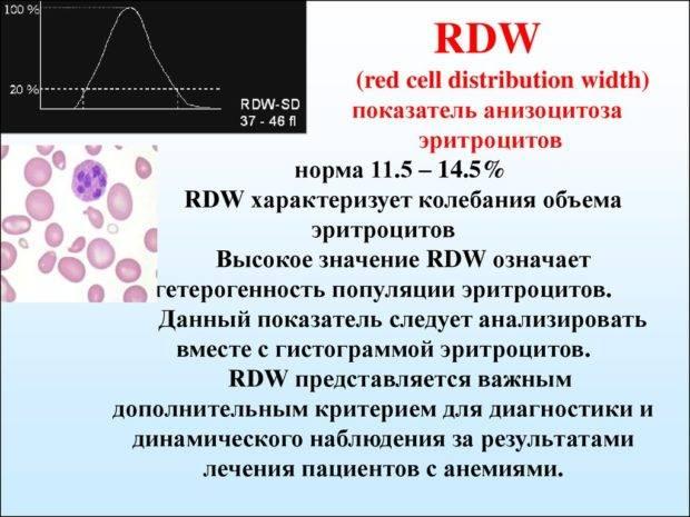 Анализ крови rdw: нормы, расшифровка, связь с mcv