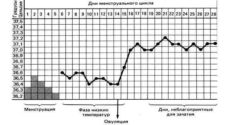 Что такое базальная (ректальная) температура? измерение ректальной температуры