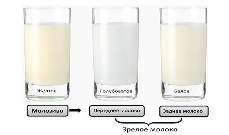 """""""переднее"""" и """"заднее"""" молоко - территория поддержки грудного вскармливания"""