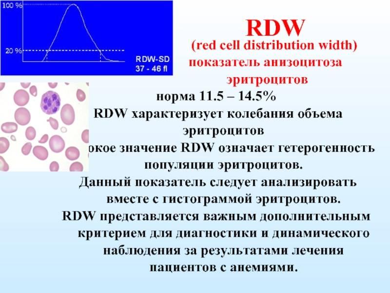 Rdw в анализе крови — что это такое, норма по возрастам