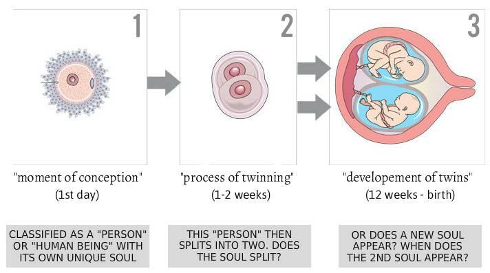Двойня после эко: типы двойни и как вынашивать