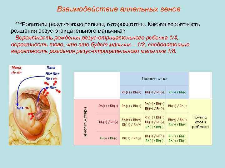 Определение резус-фактора плода по крови беременной женщины: исследования в лаборатории kdlmed