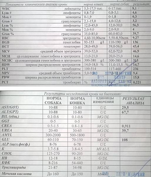 Тромбоциты | поликлиника 6