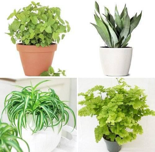 «детский сад» или 13 лучших растений и цветов для спальни ребенка