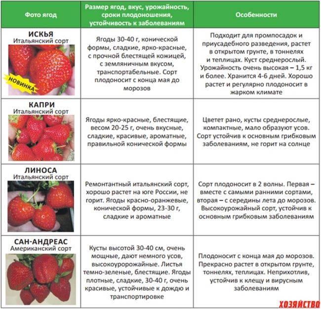 Аллергия на клубнику и землянику