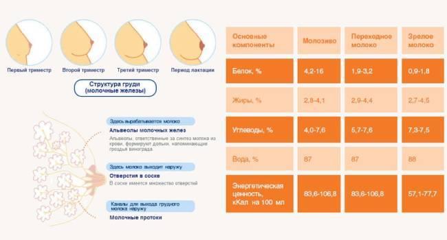 Выделение молозива во время беременности: норма и патология