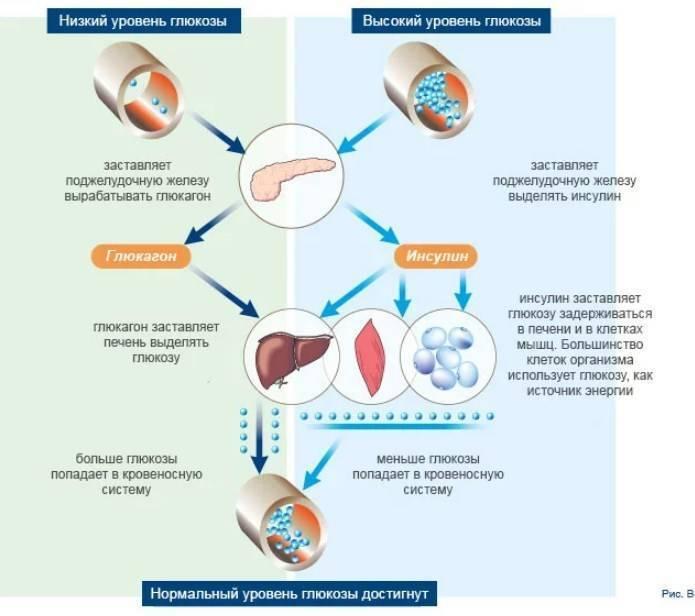 Низкий уровень сахара: как он влияет на организм – lifekorea.ru