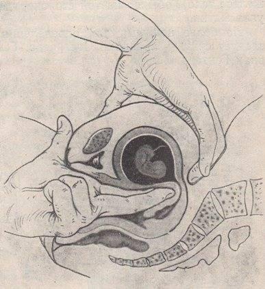 Шейка матки на ранних сроках при беременности: как выглядит до зачатия и после оплодотворения?