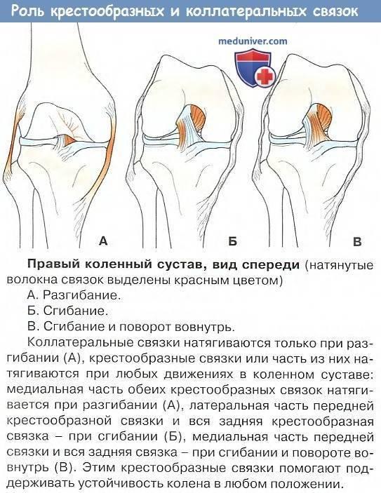 Растяжение подколенного сухожилия.!