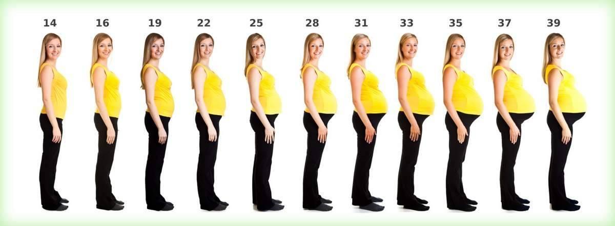 Седьмая неделя беременности: что происходит с малышом, с животом, фото узи – как выглядит ребенок, ощущения
