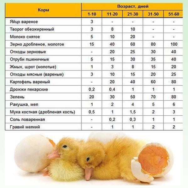 Чем полезна вареная кукуруза для ребенка