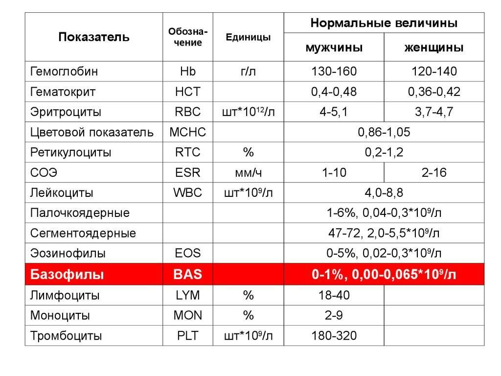 Базофилы в крови: нормы, расшифровка