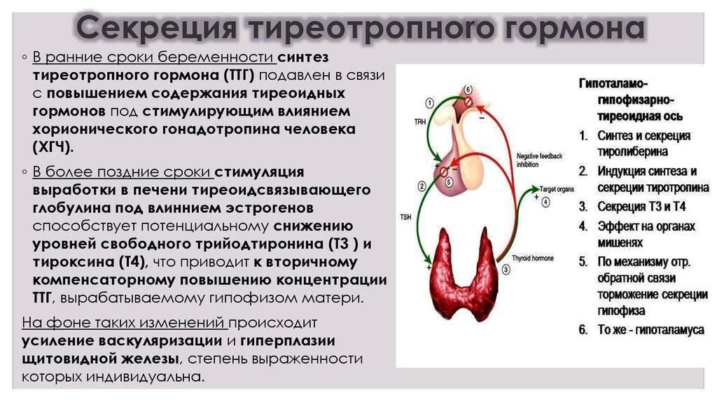 Гиперпролактинемия: причины возникновения и способы лечения