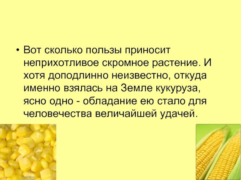 Вареная кукуруза для мам и детей: польза или вред?