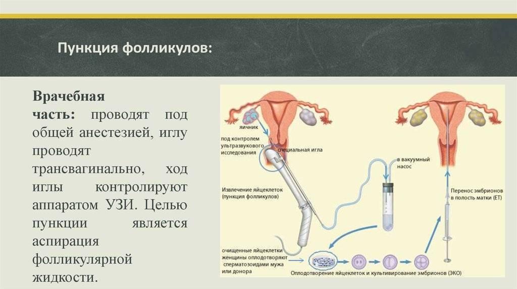 Длинный протокол эко — подробная схема стимуляции по дням | супердлинный протокол эко в клинике «линия жизни» в москве