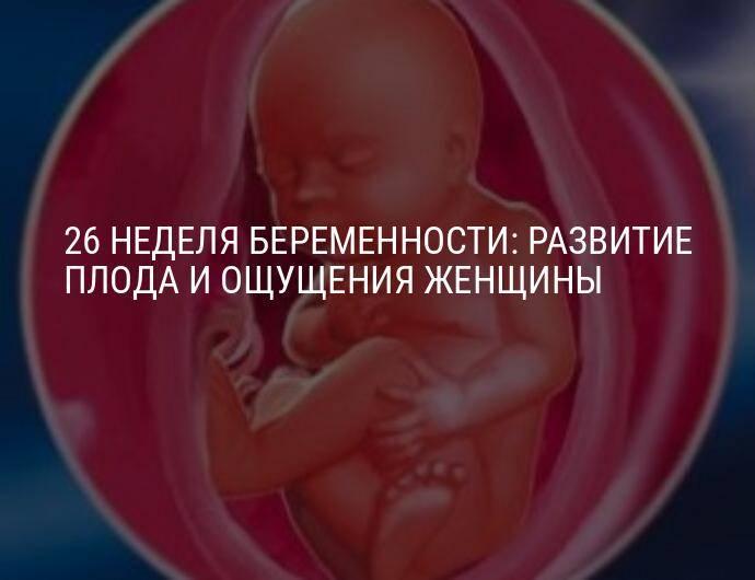 19 неделя беременности :: polismed.com