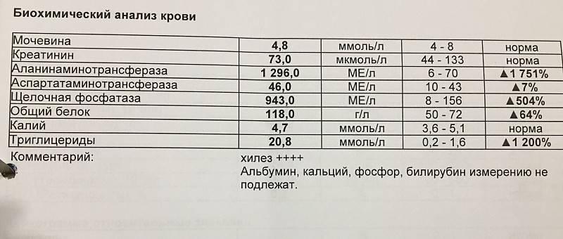 Гормоны щитовидной железы (щитовидки): норма, какие бывают, повышен