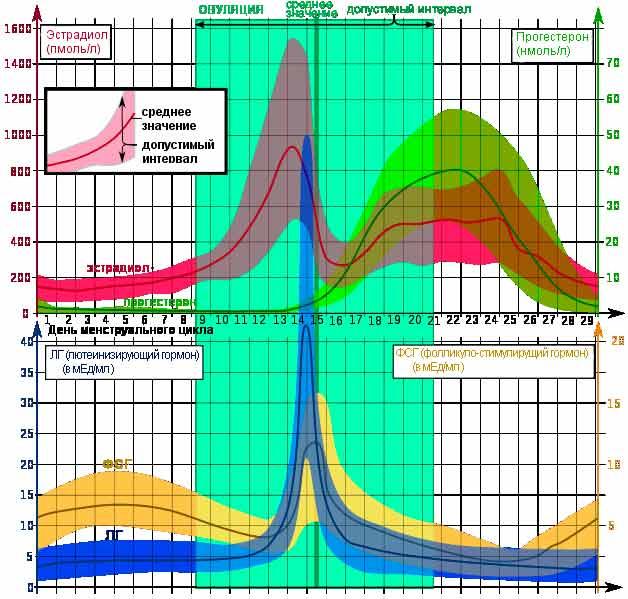 На какой день цикла сдавать эстрадиол? анализ на эстрадиол: когда и как правильно сдавать?
