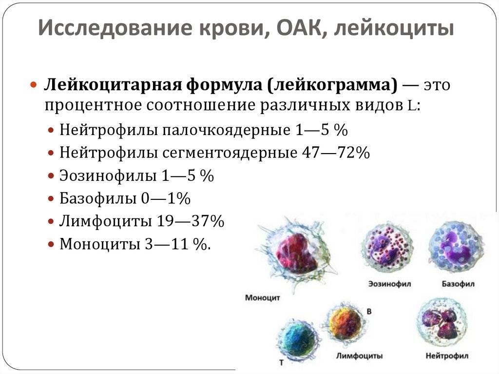 Мазок из носа на цитологию и анализ на цитологию мокроты