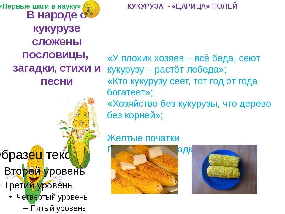 Свежая кукуруза для ребенка 1 года
