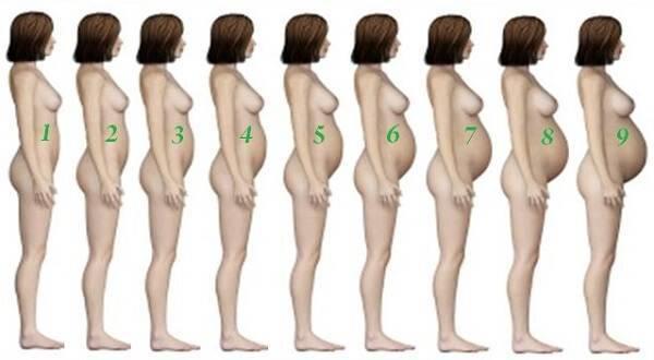 6 месяц беременности: с какой недели начинается, как выглядит живот на этом сроке?