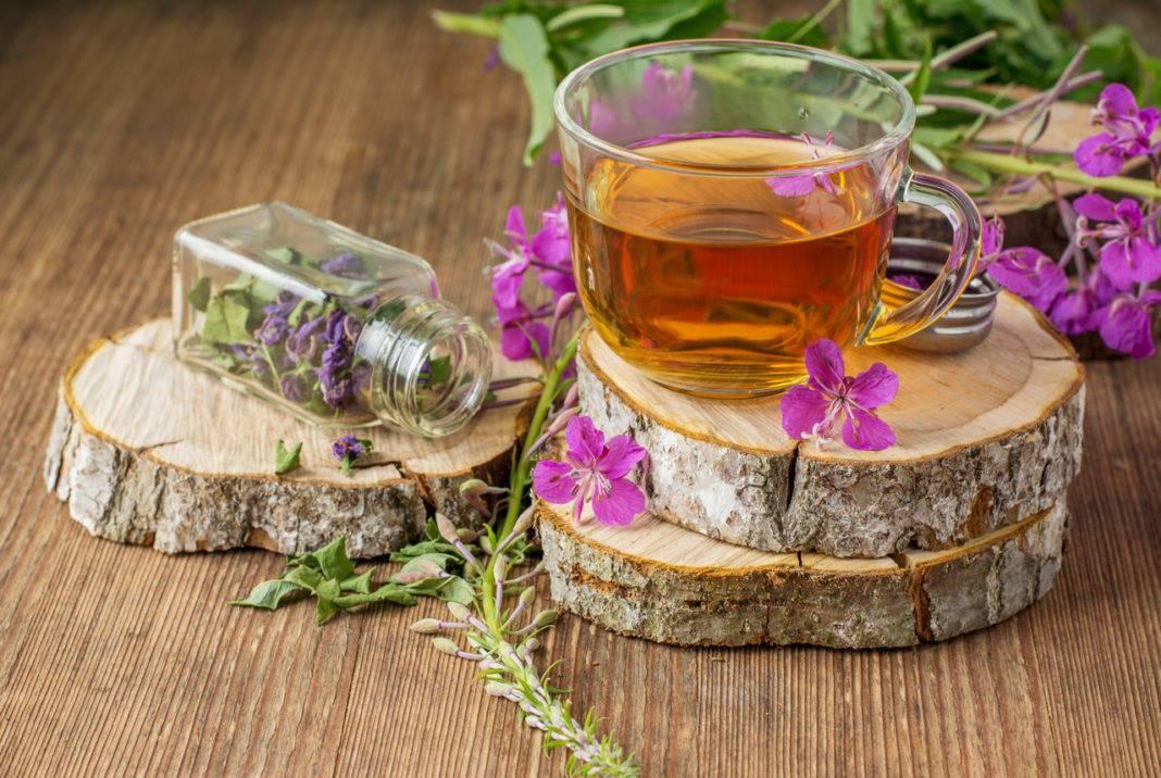 Иван чай полезные свойства и противопоказания, польза и вред травы для организма человека