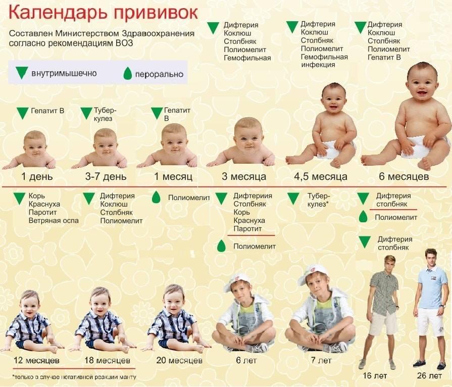 Новый статус вашего ребенка. какие прививки нужны к детскому саду и школе? гид для родителей