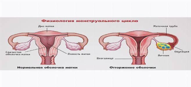 Болит грудь перед месячными: стоит ли волноваться?