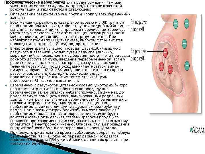 Аллоиммунные антитела к rh-антигену: показания, подготовка, норма