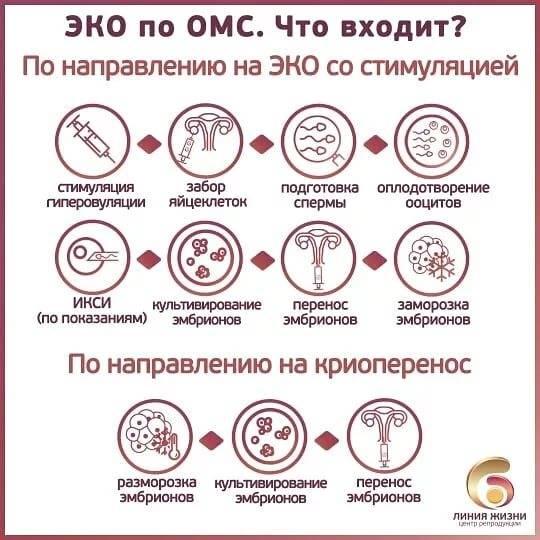 Схема получения квоты на эко по омс – особенности, документы