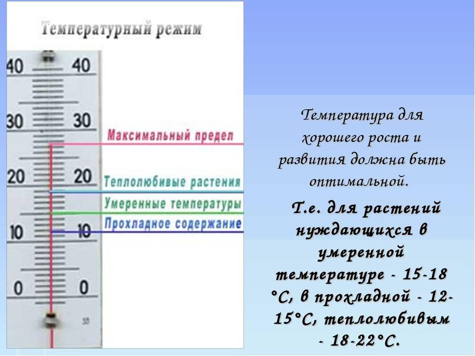 Температура в комнате для грудного ребенка