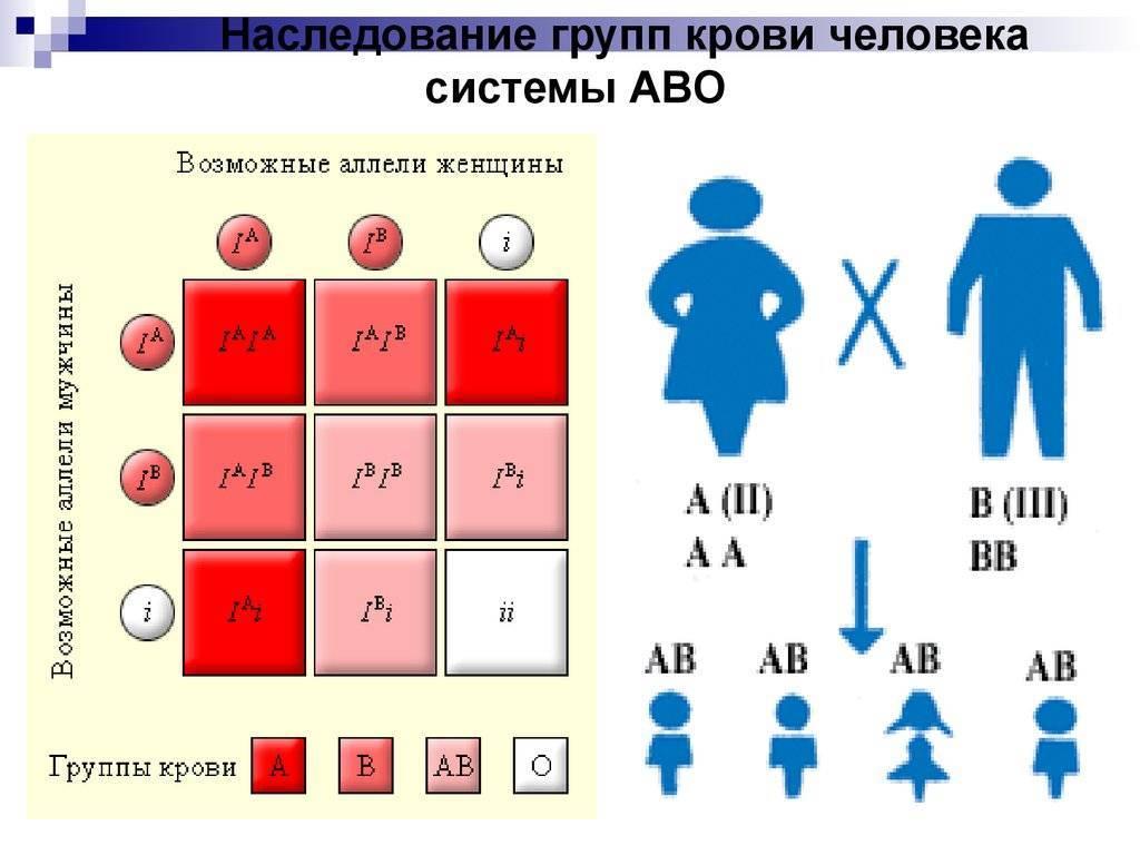 Чью кровь наследует ребенок при рождении ~ детская городская поликлиника №1 г. магнитогорска